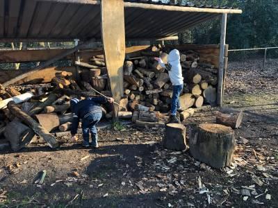 Hjbllanos-bevers-houtverzamelen
