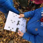 Bevers zoeken sporen van de wolf in het bos